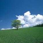 【ヒーリング作業用BGM】 癒しの音楽と美しい自然 日本の四季